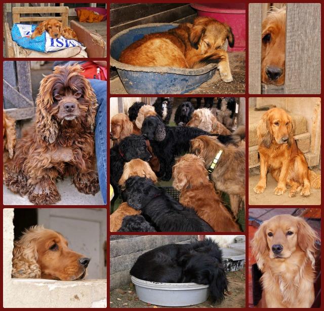 hund in ungarn kaufen